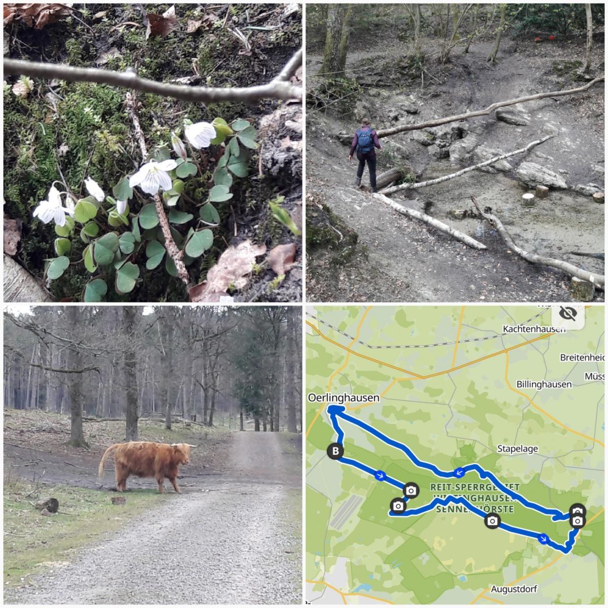 Weidmann-Gabriele-14-Challenge-Wistinghauser-Senne-OdrwU
