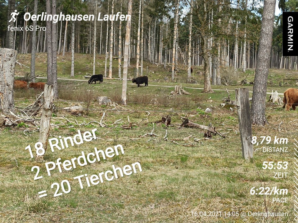 Wohlert-Stephan-14-Challenge-Wistinghauser-Senne-vT8oU