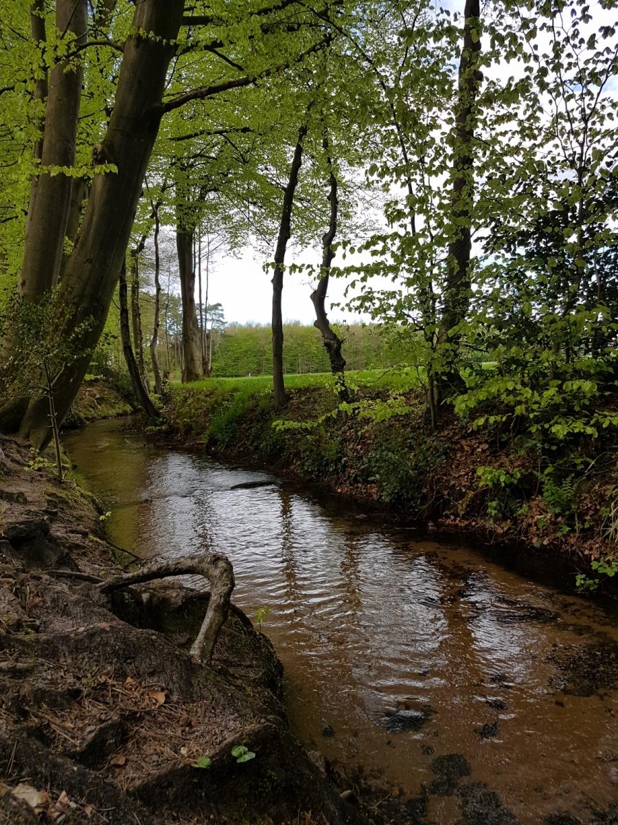 Glasneck-Katrin-17-Challenge-Nature-Run-kxWiI