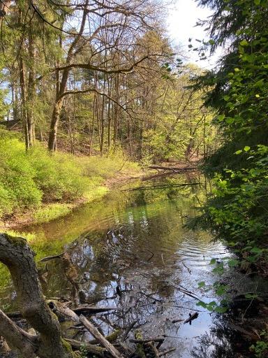 Rodenbeck-Guenter-17-Challenge-Nature-Run-gjeJ0