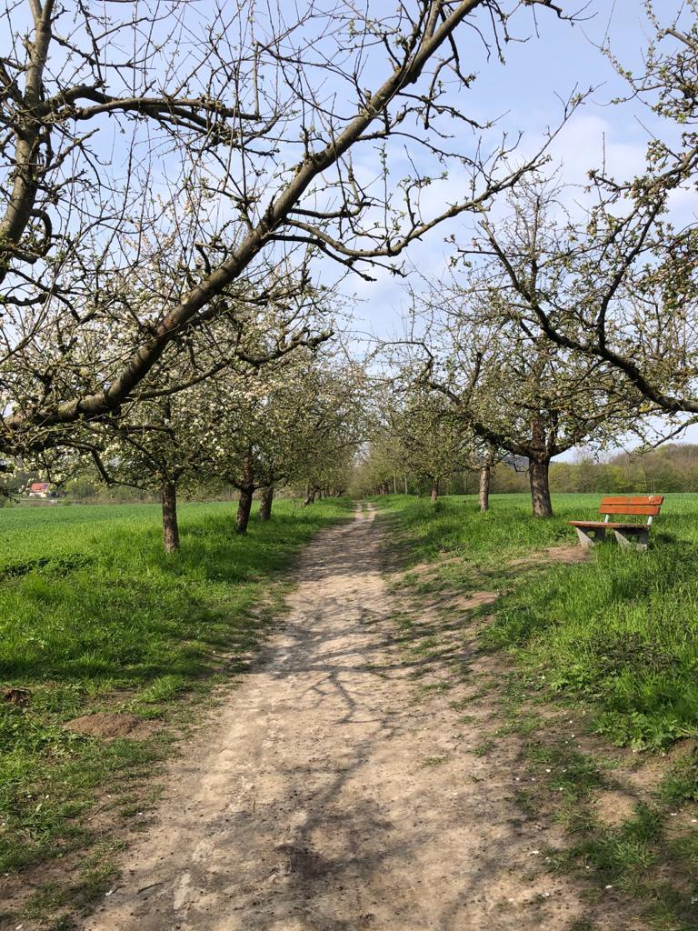 Wendt-Linda-17-Challenge-Nature-Run-wZxdD