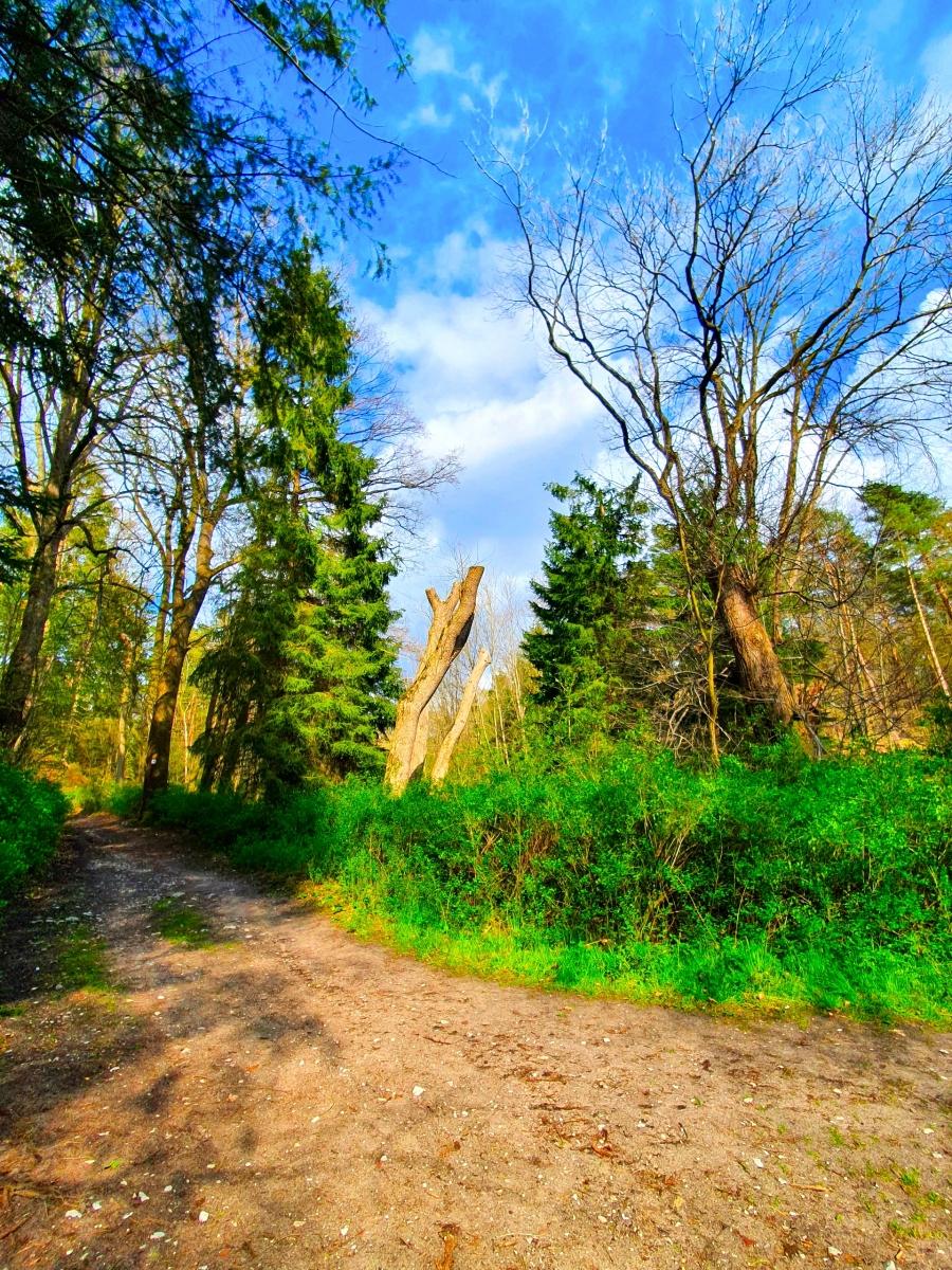 Wollenberg-Sabine-17-Challenge-Nature-Run-j9tuv