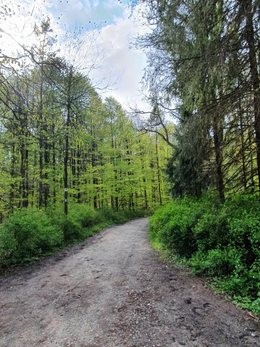 Wollenberg-Sabine-17-Challenge-Nature-Run-rrxIA
