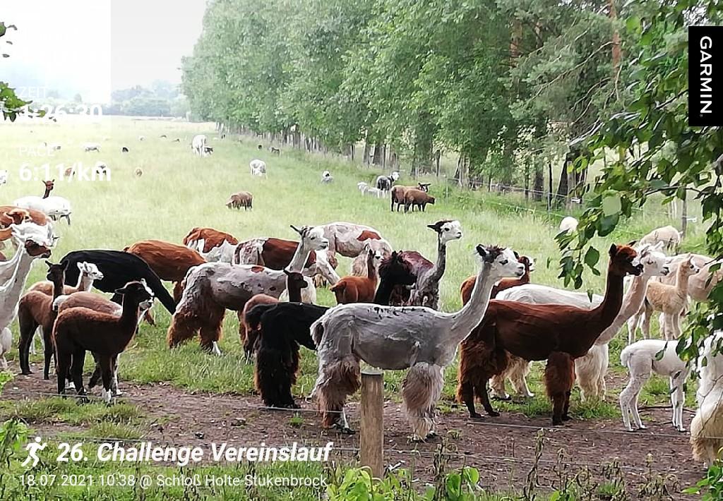 Wohlert-Stephan-26-Challenge-Vereinsdauer-Lauf-E7j5j